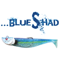 image-une-blue-shad