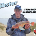 Ribster : le worm au top pour le rouget grondin
