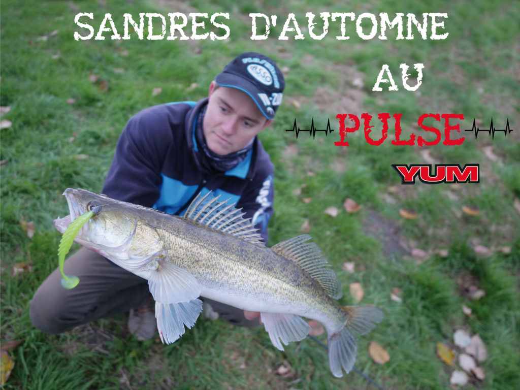Sandres d'automne au Pulse Yum
