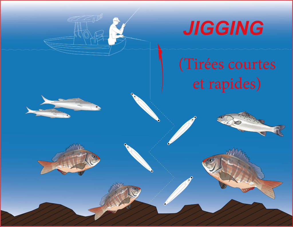 Jigging ultra light avec la Cuiller Anchois L-Jack